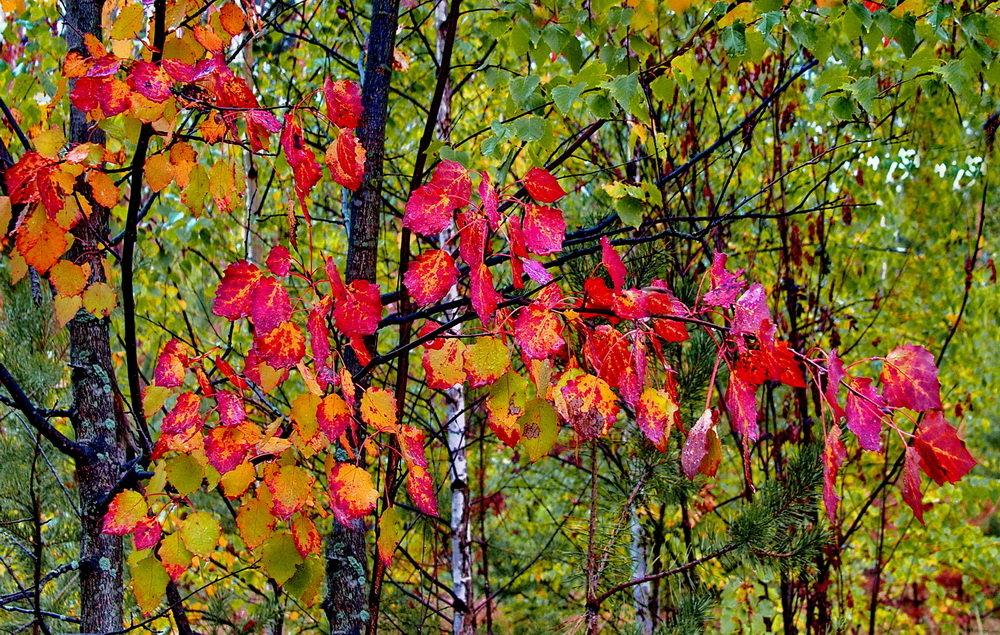 И боль сгорающей листвы... - Лесо-Вед (Баранов)