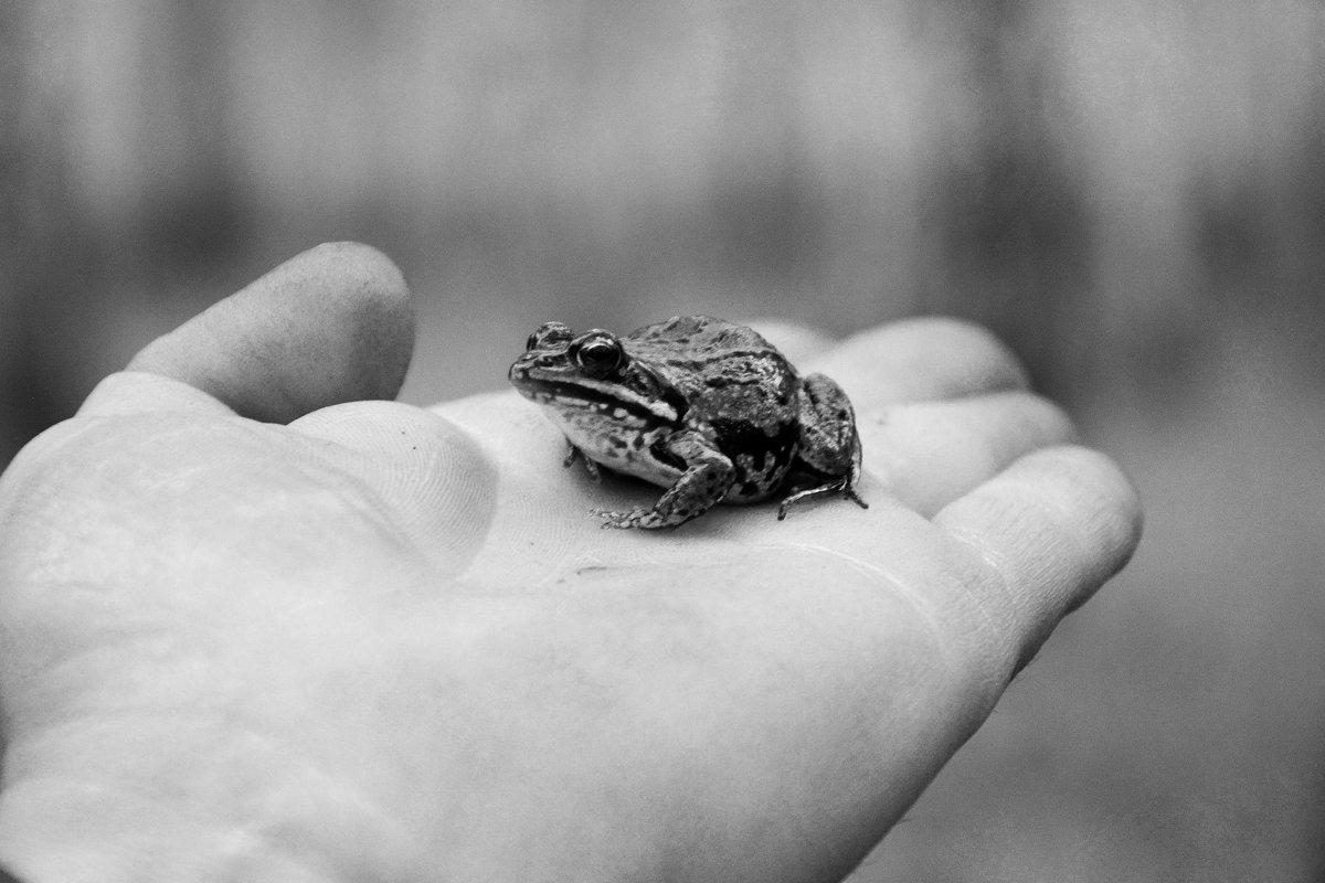 Лягушечка... - Дмитрий Петренко