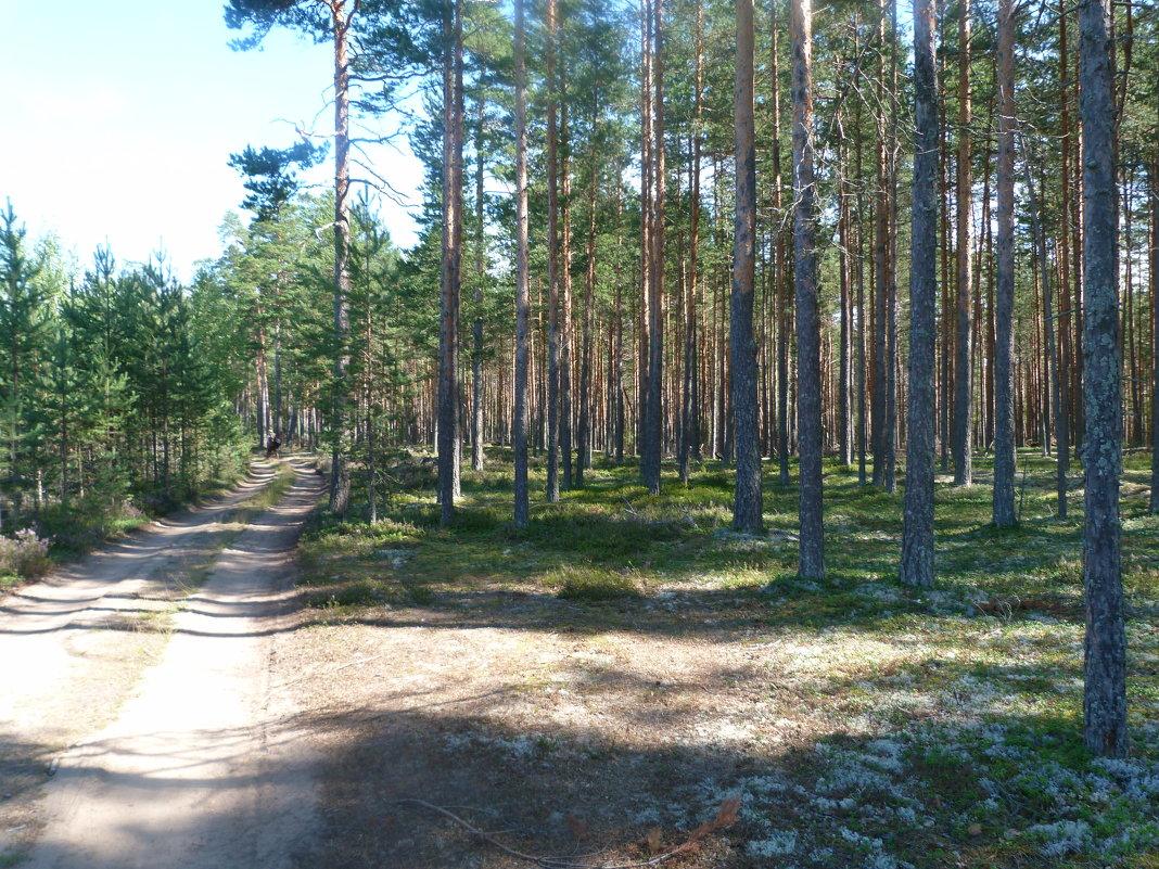 Лес в Сосоново - Oleg