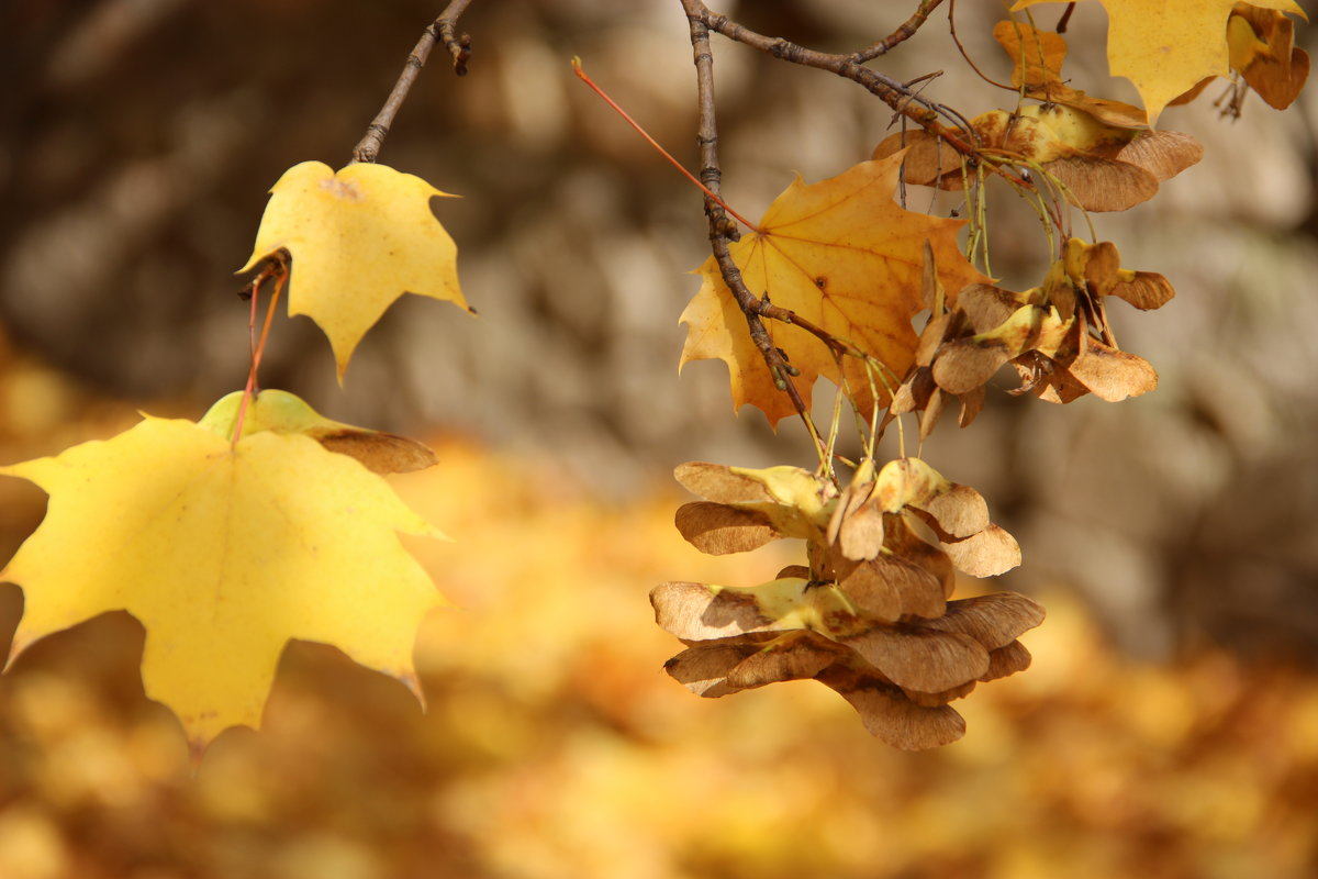 Осень пришла. - Ирина Королева