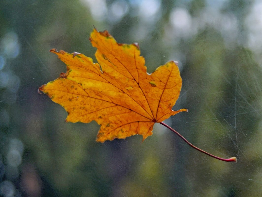 Осенний привет на лобовом стекле... - владимир