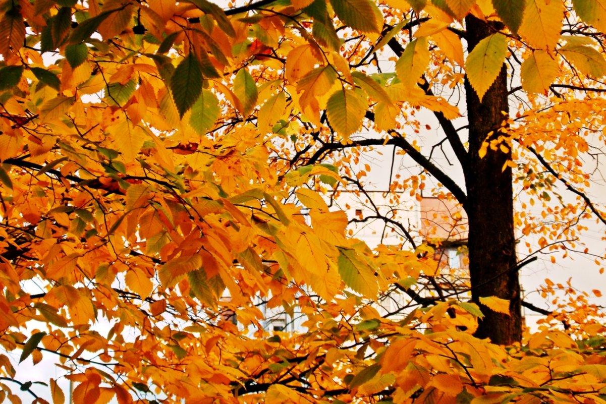 Осенний день-2 - Фотогруппа Весна.