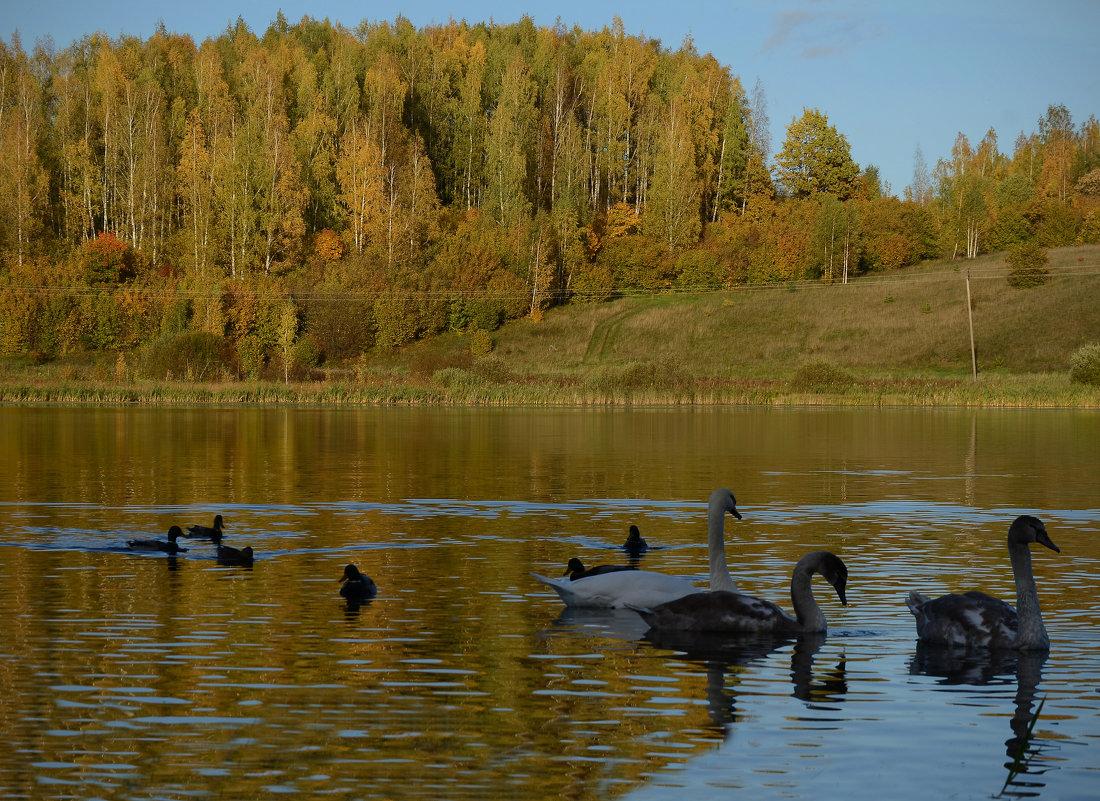 Птицы на  Городищенском озере - Наталья Левина