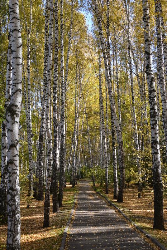 Осень - grovs