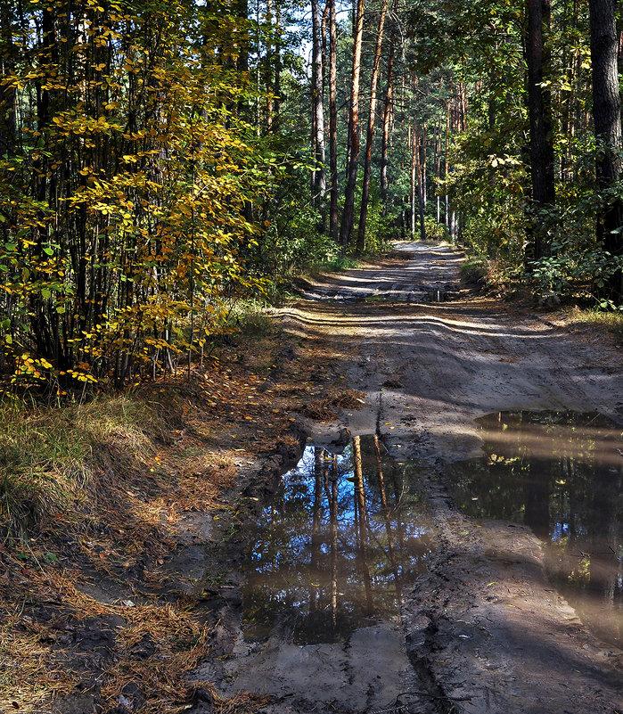Тайна лесных дорог... - Александр Бойко