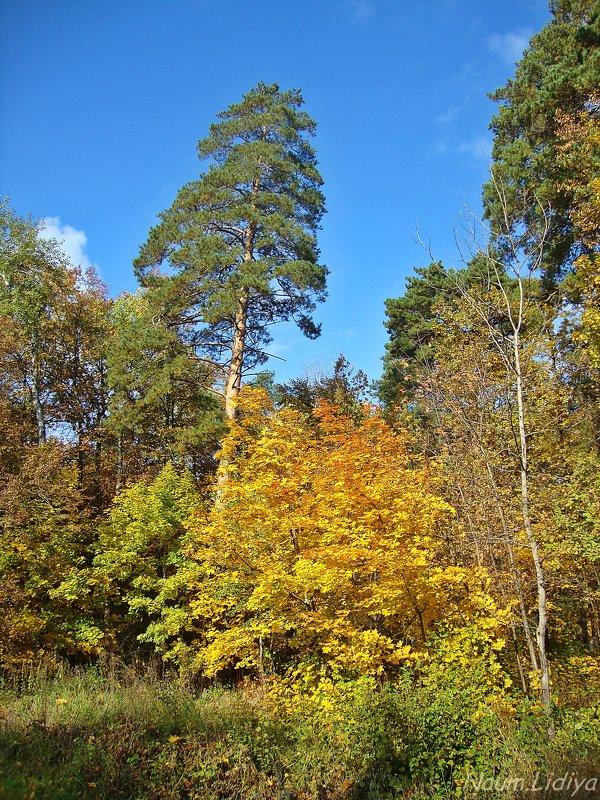 Осень в любимом городе - Лидия (naum.lidiya)