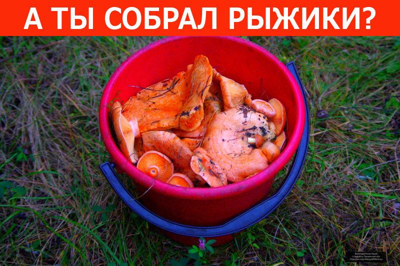 Жду доклада!))) - Юрий Рачек