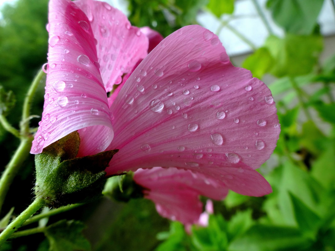 Дождь. - Елизавета Успенская