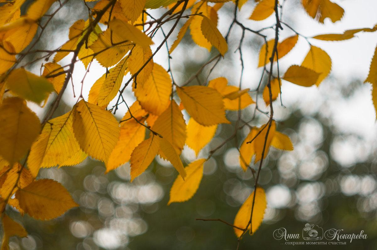 Осень - Анна Кокарева