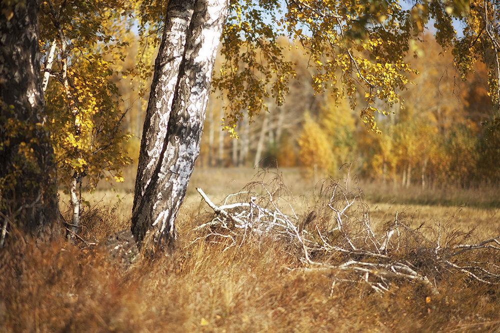 Осенняя пора... - Лилия *