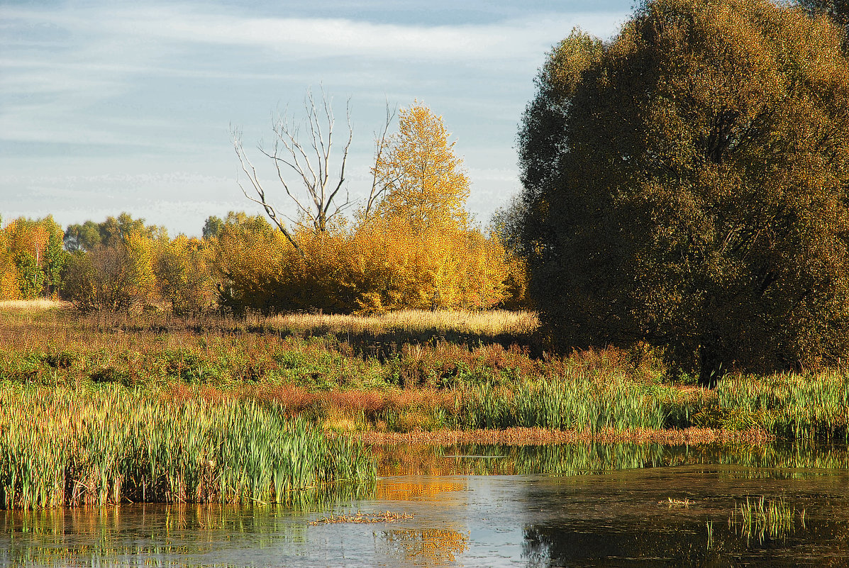 золотая осень - sergej-smv