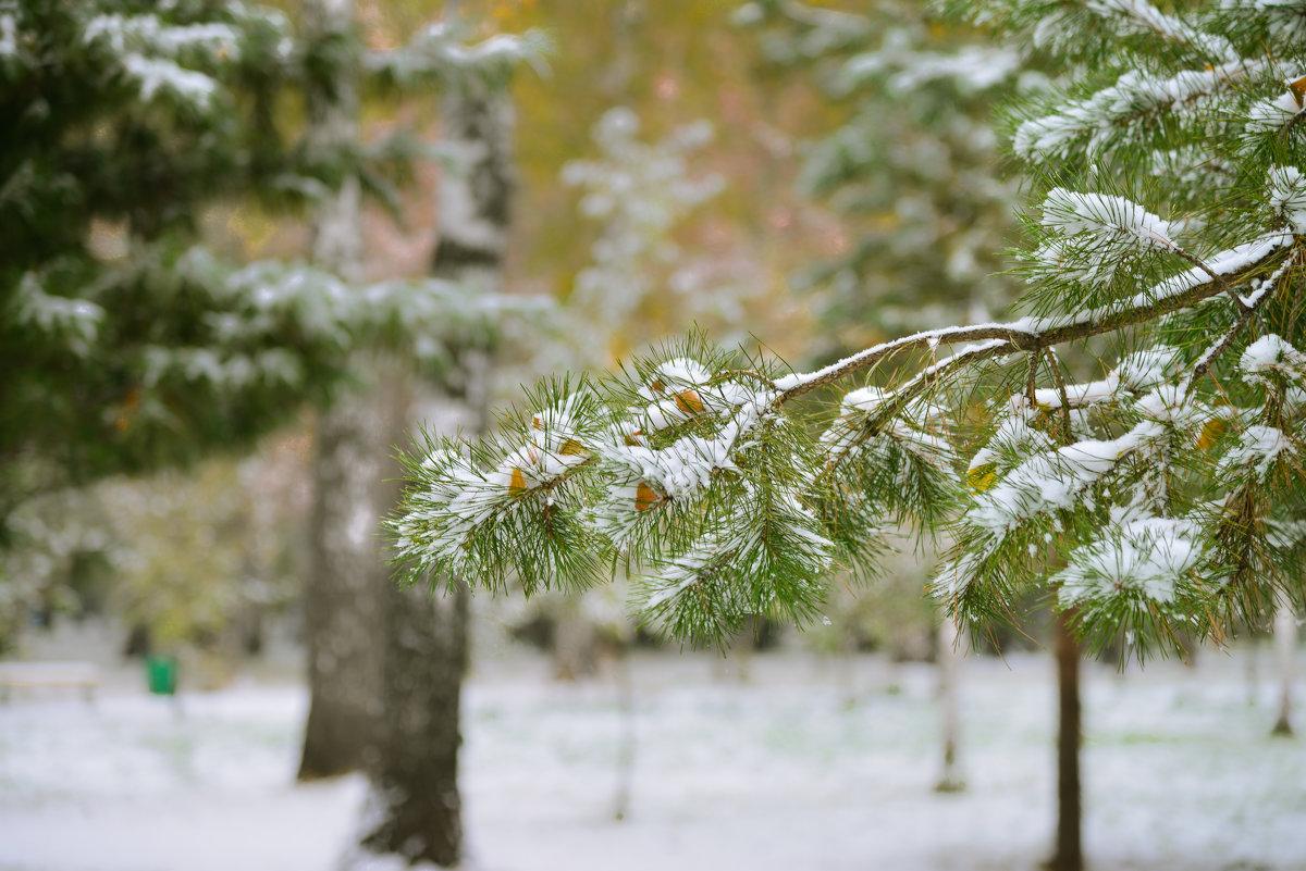 Первый снег - cfysx