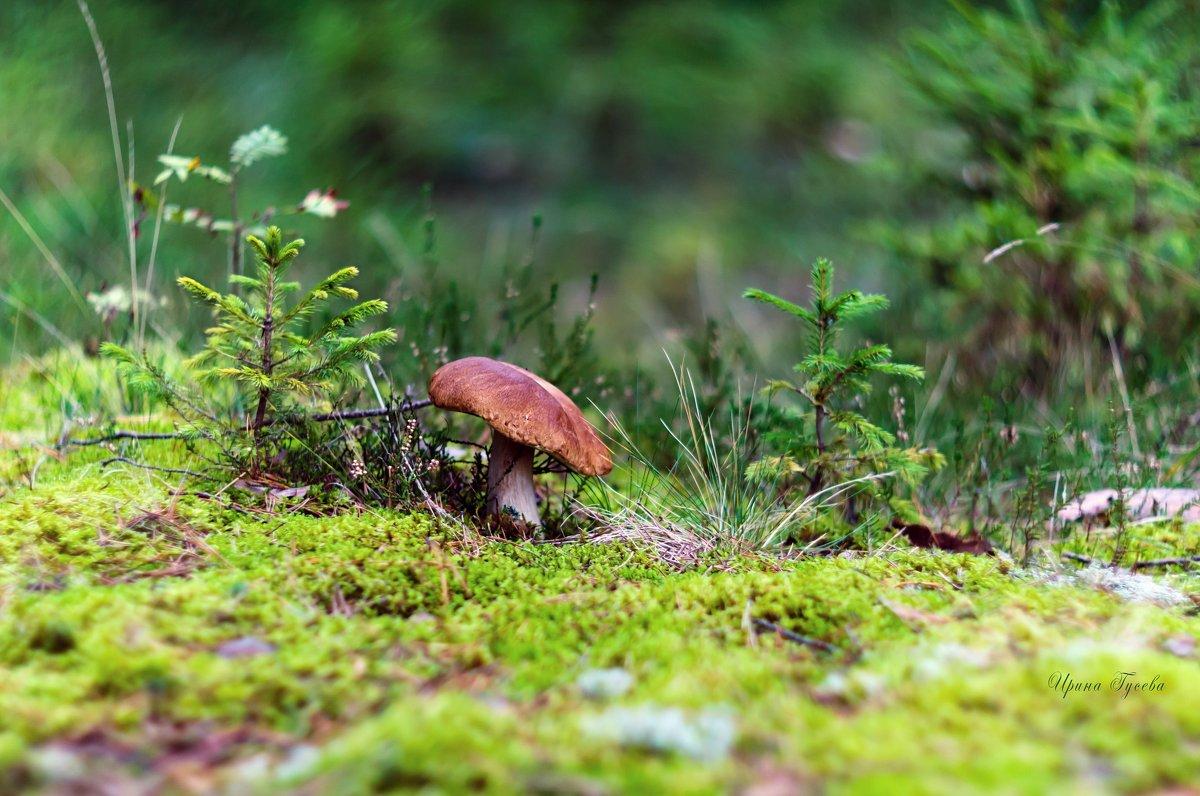 однаждв в лесу - Ирэн