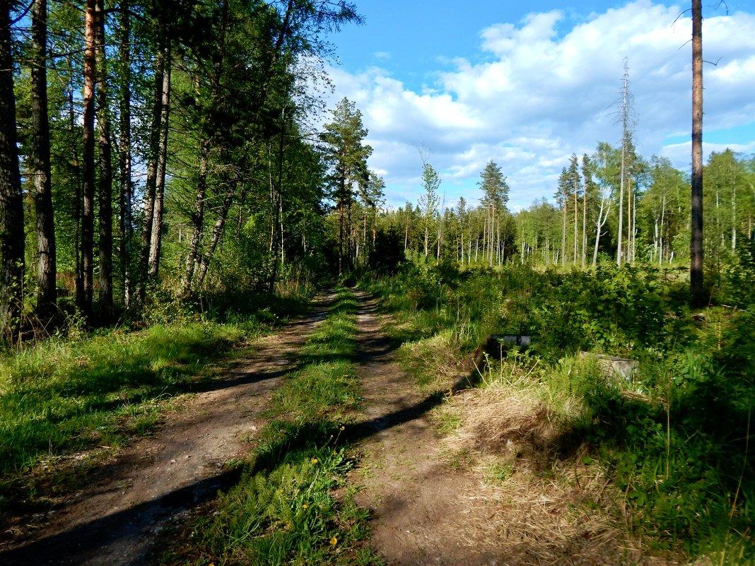 дорога в лес - linnud