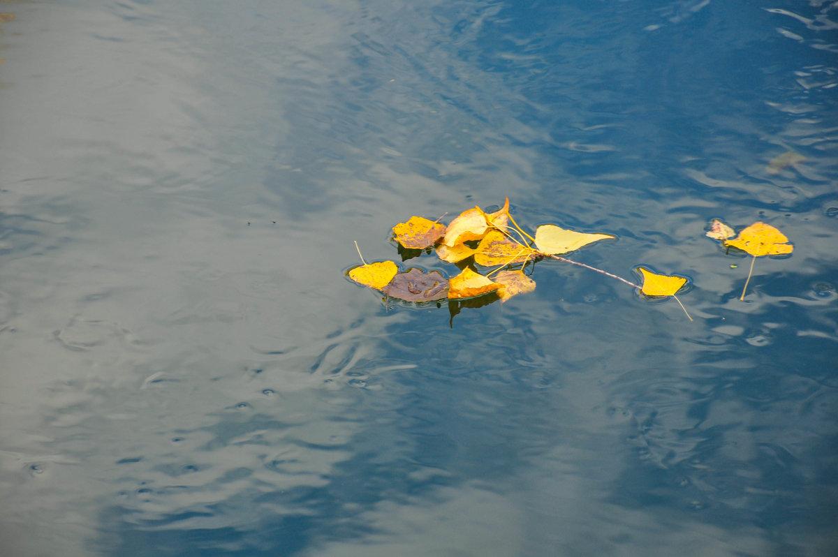 Осенние листья на воде - Сергей Тагиров