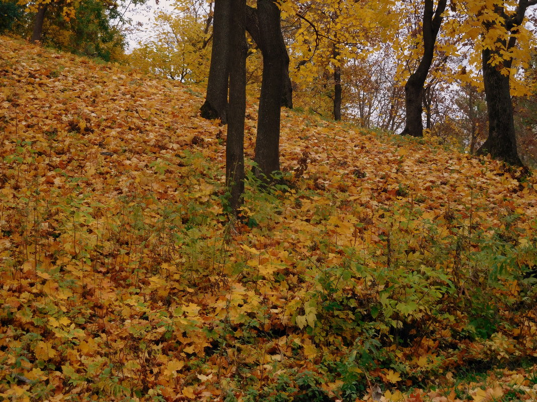 Осень золотая - ирина