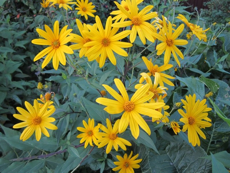 Жёлтые цветы - Дмитрий Никитин