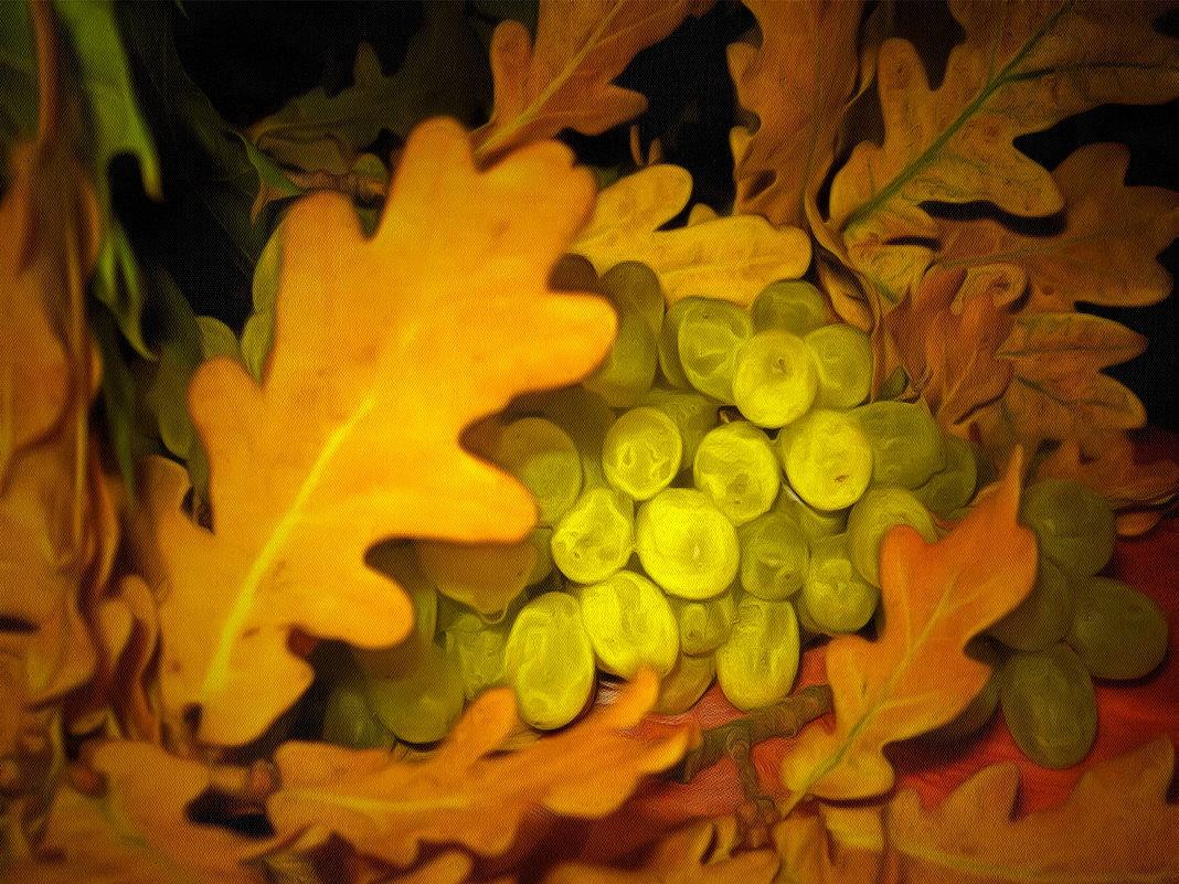 Осенняя обнова винограда.... - Tatiana Markova