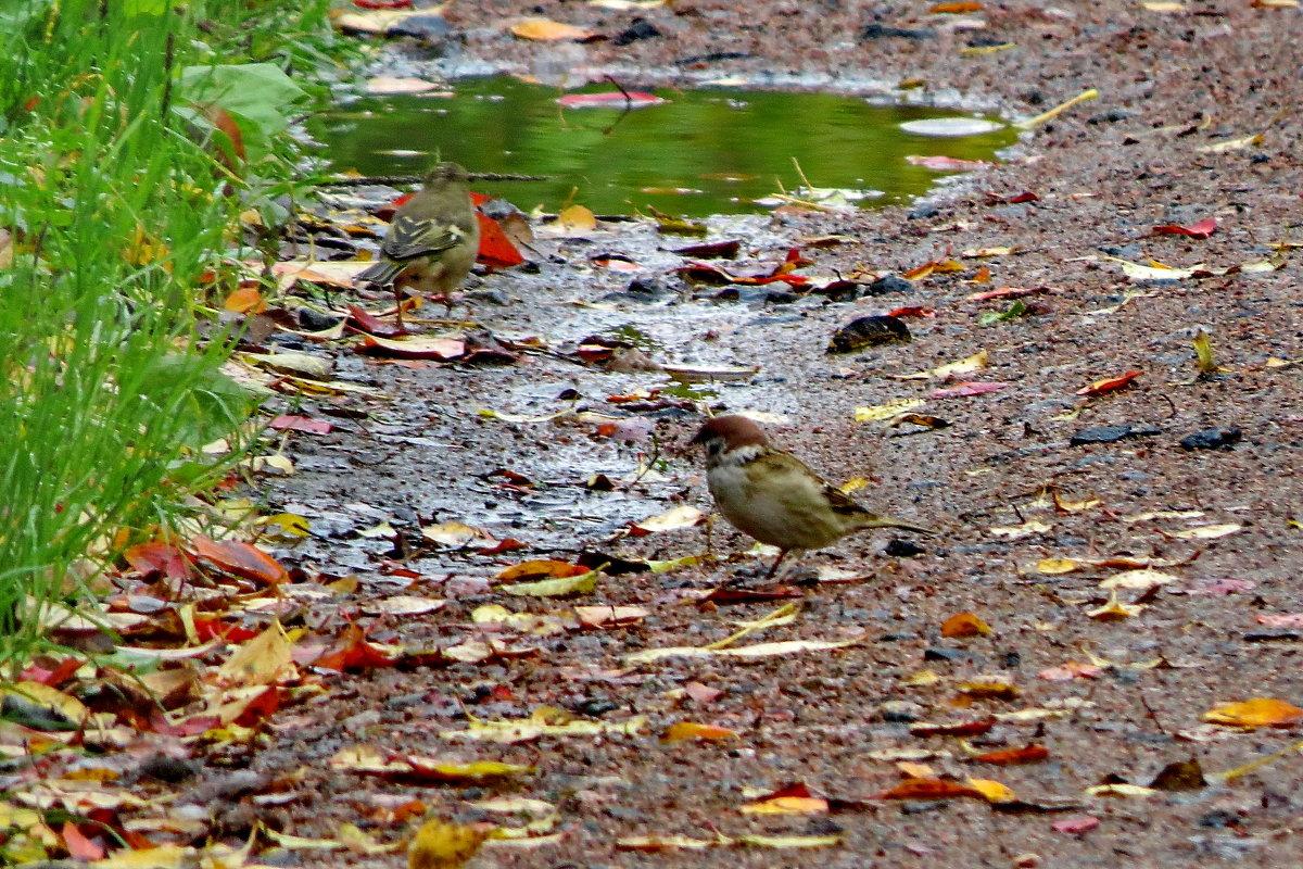 Осень дождями ляжет... - Светлана