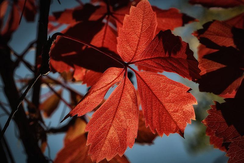Осень - Nerses Davtyan