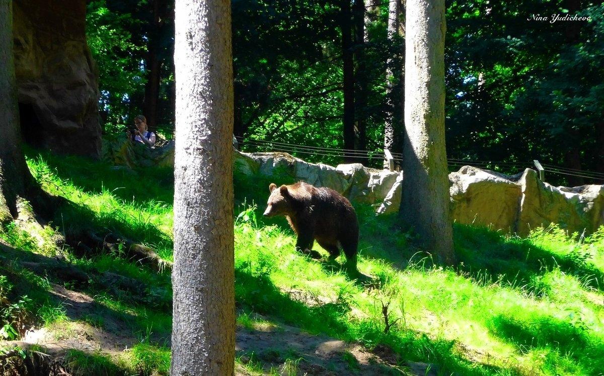 Медведь и девушка-фотограф - Nina Yudicheva