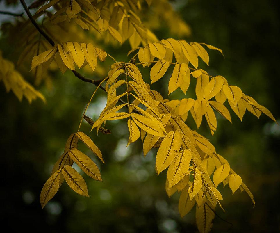 Осень... - Nonna