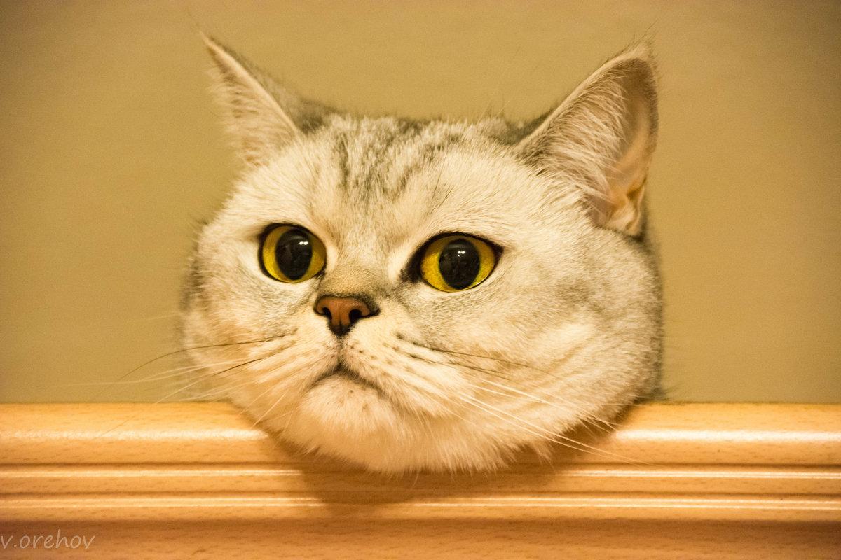 Комарик - я тебя вижу ( взгляд из под  потолка ). - Виктор Орехов