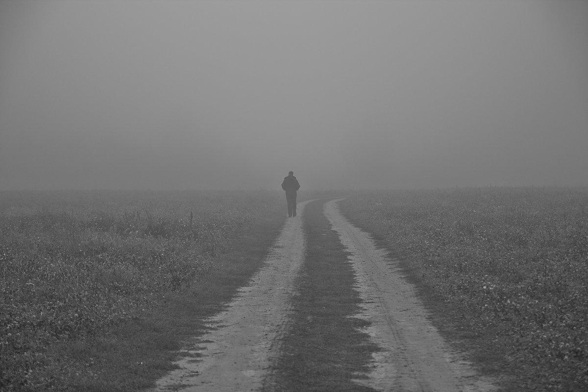 дорогой в туман - Седа Ковтун
