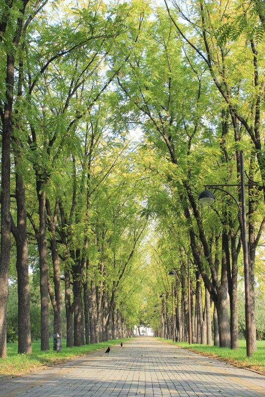 Осень в октябре - Ирина Ивановна