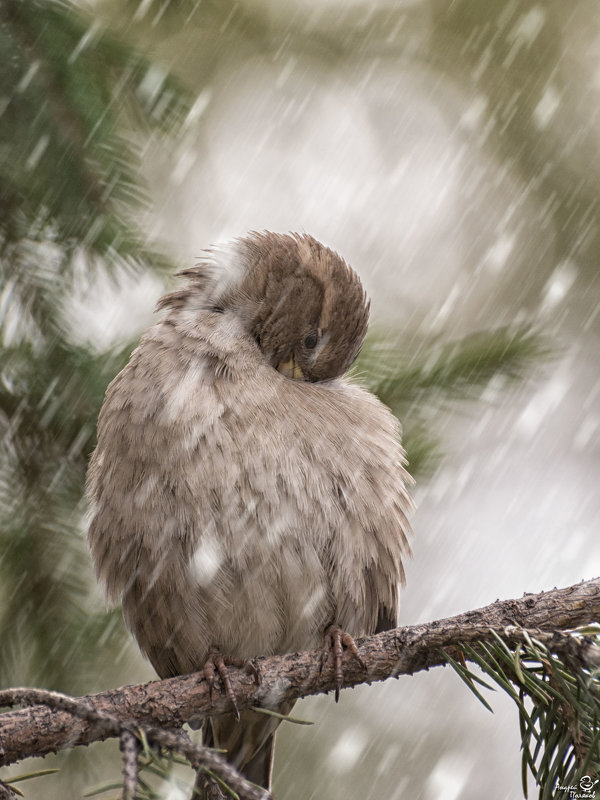 Воробей и первый снег - Андрей Поляков