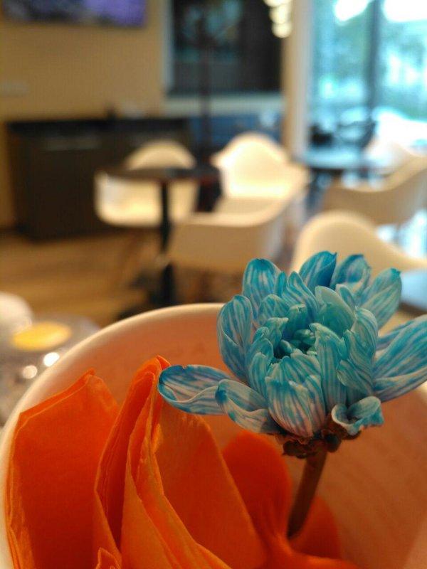 в кафе - Olga *****