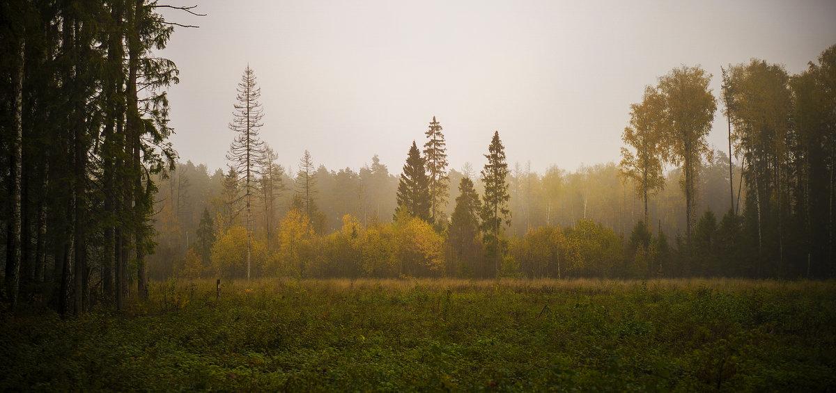 Туманное утро - Алексей Строганов