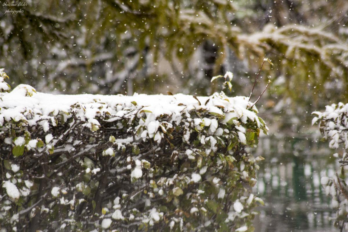 первый снег - Екатерина Бильдер