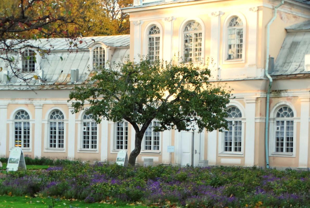Большая оранжеря и дерево - Владимир Гилясев