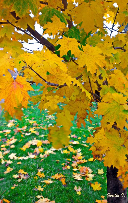 Осень. - Ilya Goidin