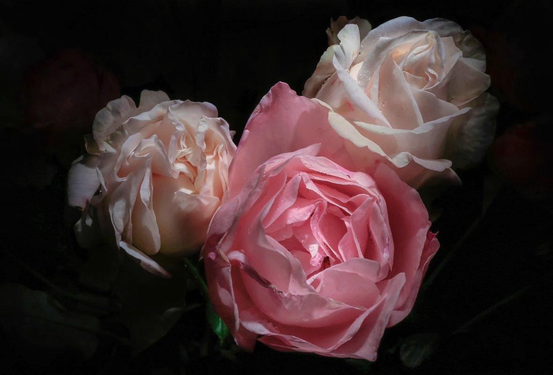 Розы - Svetlana Sneg