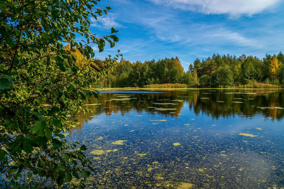 Осень на лесном озере - Андрей Дворников