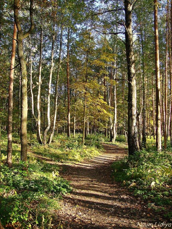 Осенний лес - Лидия (naum.lidiya)