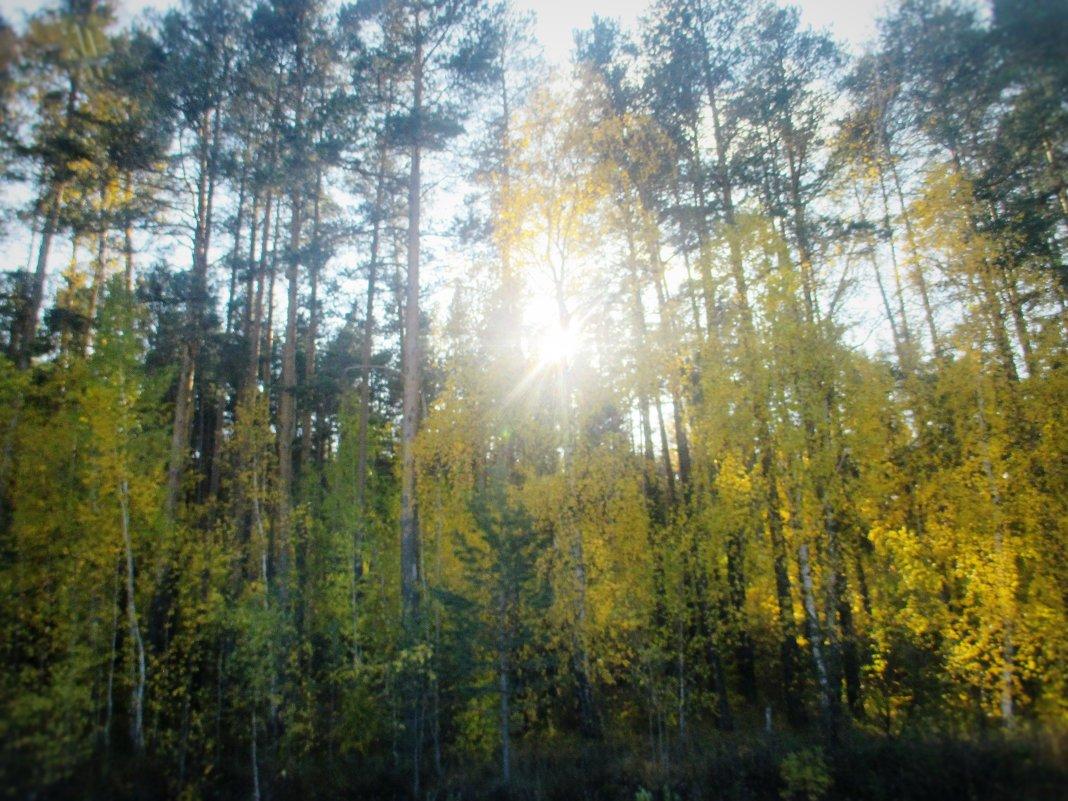 Солнце сквозь ветви деревьев. - Valentina