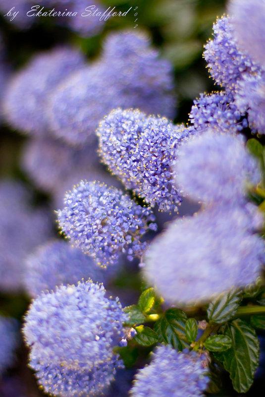 Сиреневые цветы - Ekaterina Stafford