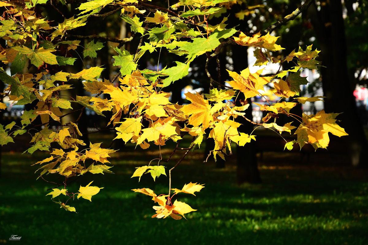 Осень. - Paparazzi