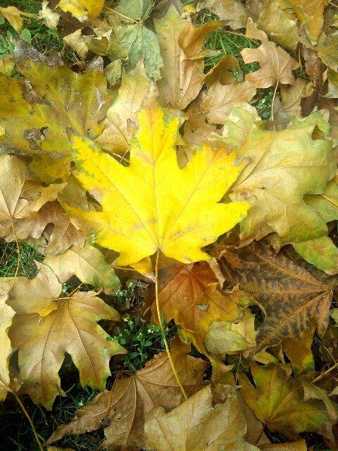 Осенний желтый лист - Татьяна Королёва