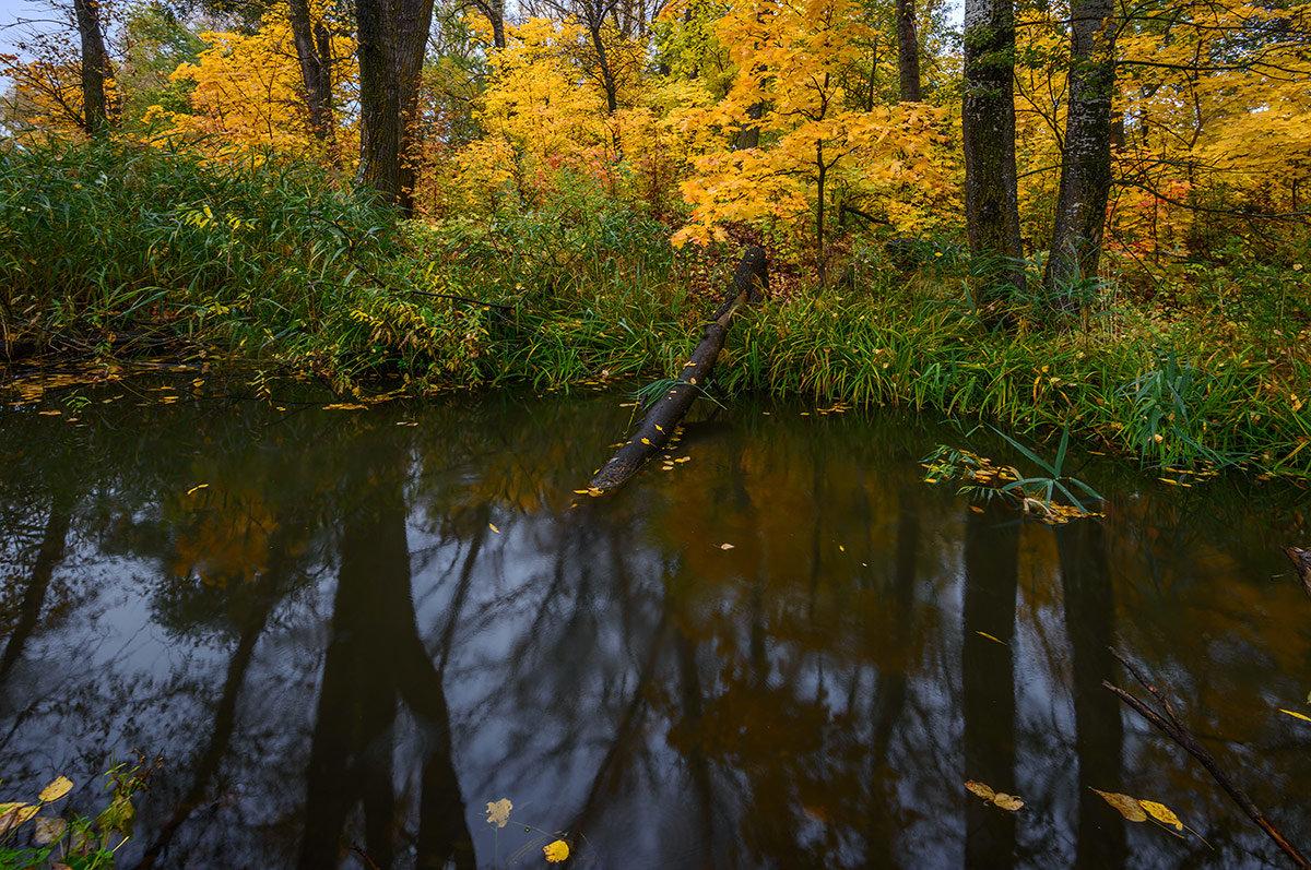 Лес... - Влад Никишин