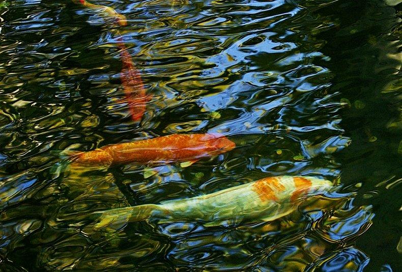 рыбки из пруда - Александр Корчемный