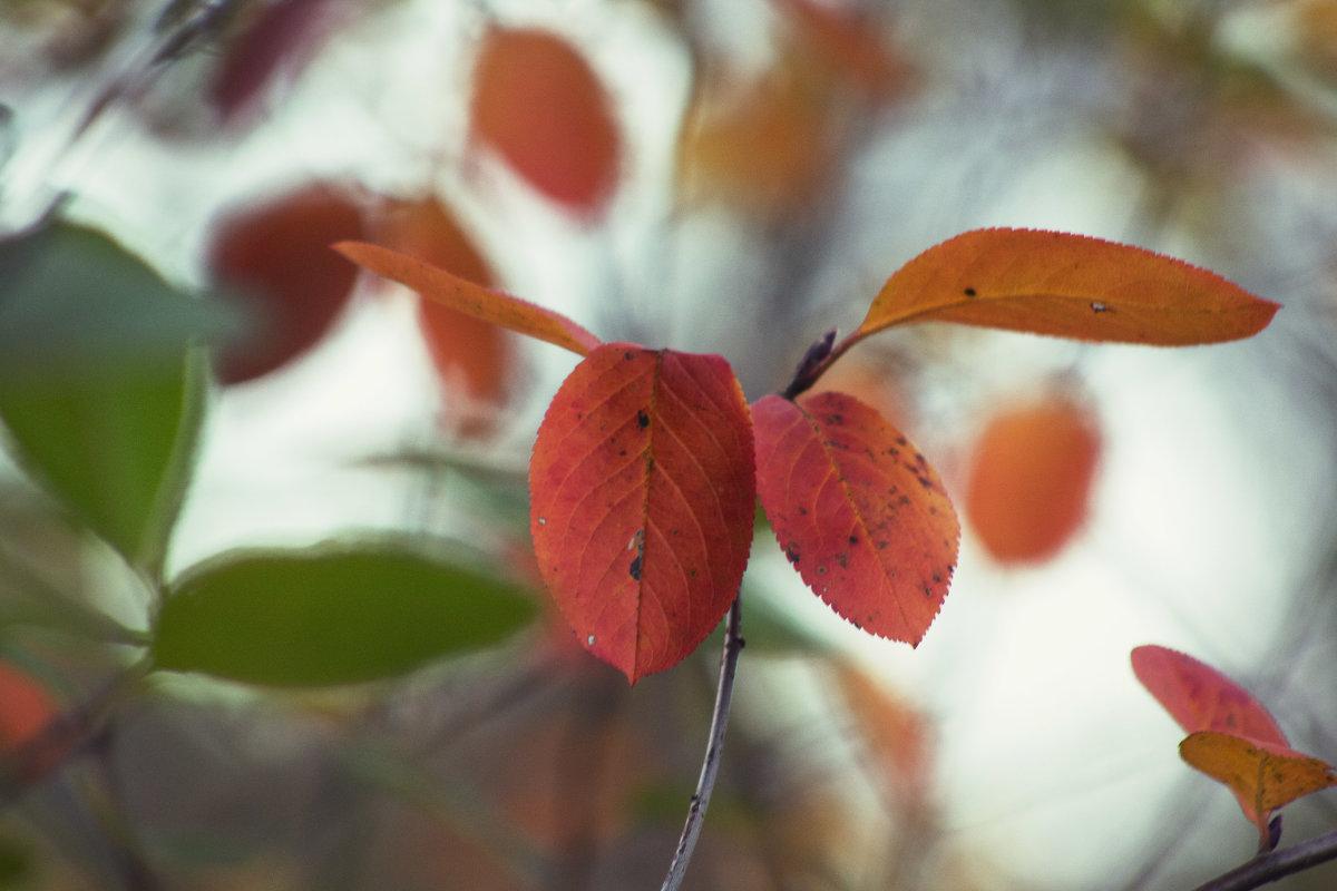 Оранжевые листья - Aнна Зарубина
