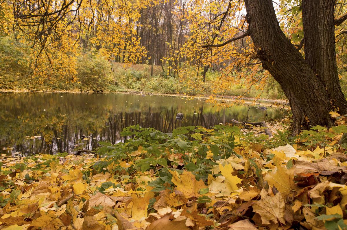Осень золотая - Константин Тимченко