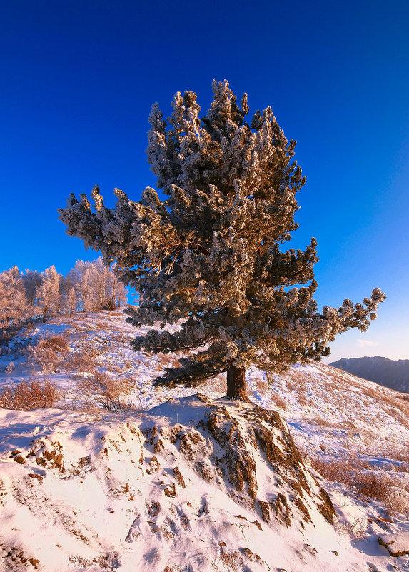 На горы зимние, взор Ваш, пусть неутомимым будет 7 - Сергей Жуков