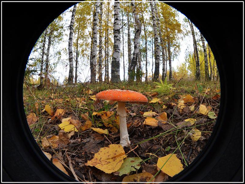 Осень. - Борис Гуревич