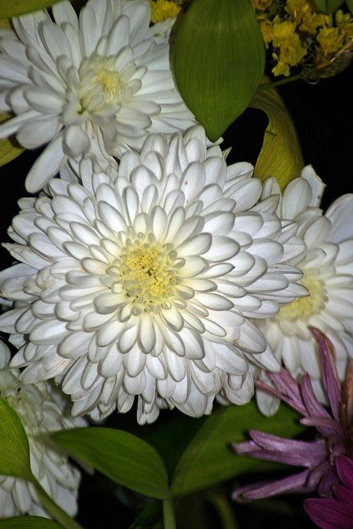 хризантемы - Александр Корчемный