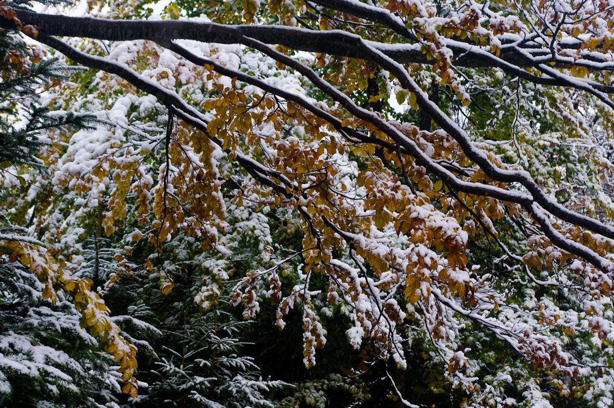 Первый снег в октябре - Александр Крупский